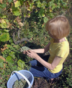 Wine Trail Traveler visit Georgia before iwinetc