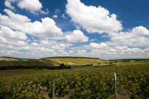 Aube en Champagne iwinetc 2015