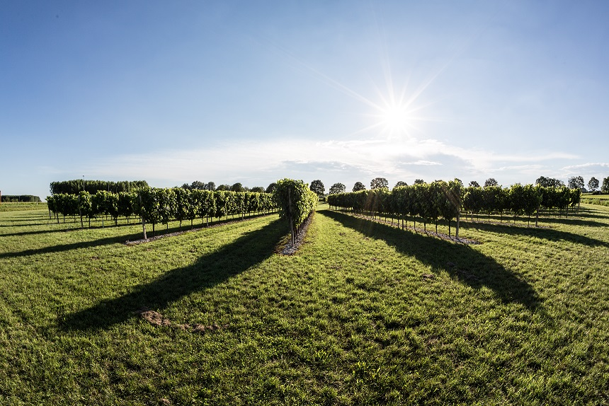 Wine tourism and safe distancing