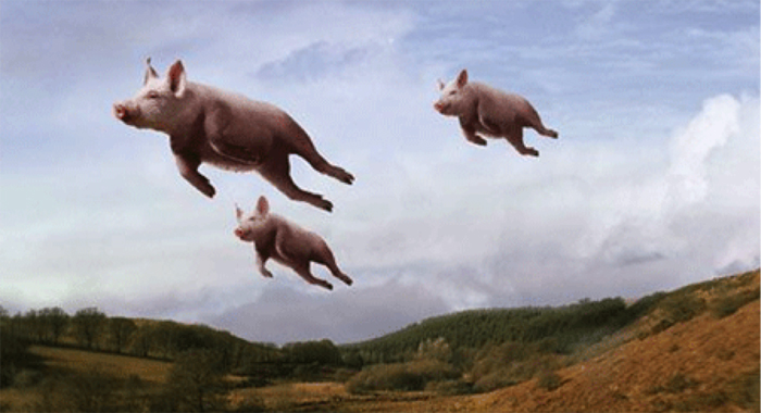 Image result for pigs can fly