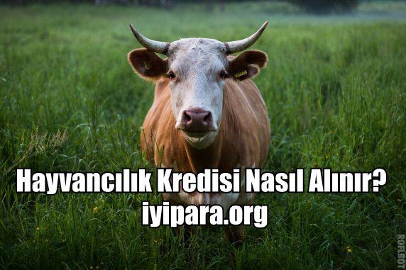 Hayvancılık Kredisi Nasıl Alınır? (2018- 2019)