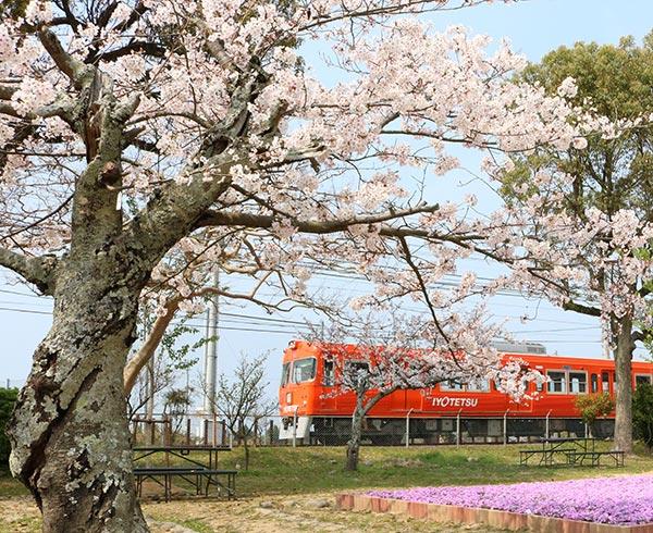 観光・沿線おでかけ | 梅津寺公園 | 伊予鉄