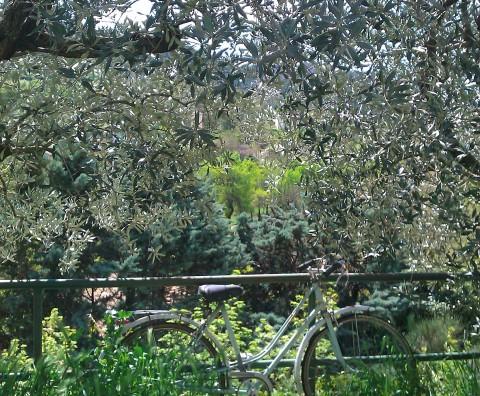 Cultiver l'endive comme on cultive la fadeur - Crédit photo izart.fr