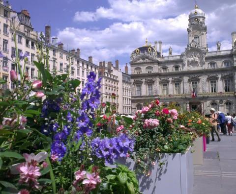 Des roses par milliers à Lyon - Crédit photo izart.fr
