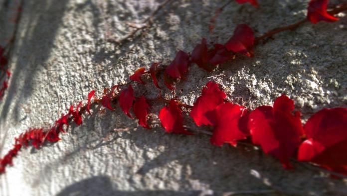 Pourquoi j'aime tant la Courbe de Lissajous - Crédit photo izart.fr