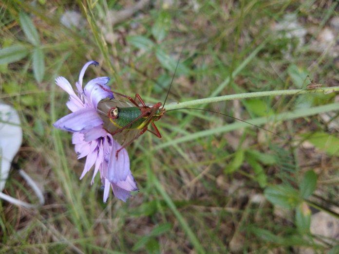 Le temps du parfum des fleurs - Crédit photo izart.fr