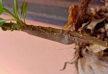 Les fourmis dorment la nuit - Crédit photo izart.fr
