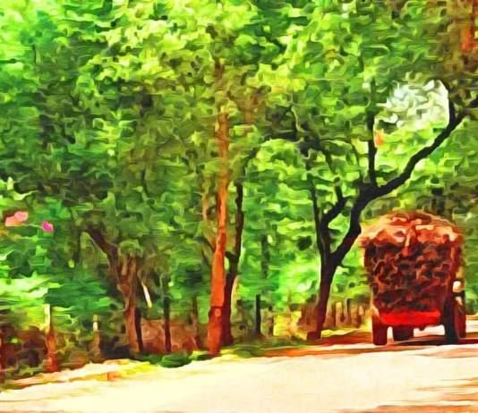 Brame du cerf dans la forêt indienne - Crédit photo izart.fr