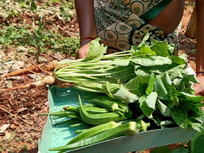 J apprends le tamoul au jardin - Crédit photo izart.fr