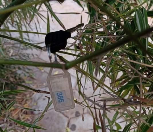 Les clefs poussent sur le bambou - Crédit photo izart.fr
