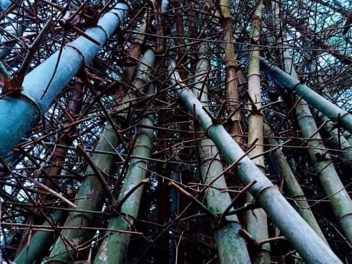 Du bambou au bambou - Crédit photo izart.fr
