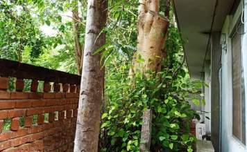 Le béton qui gâche l'arbre - Crédit photo izart.fr