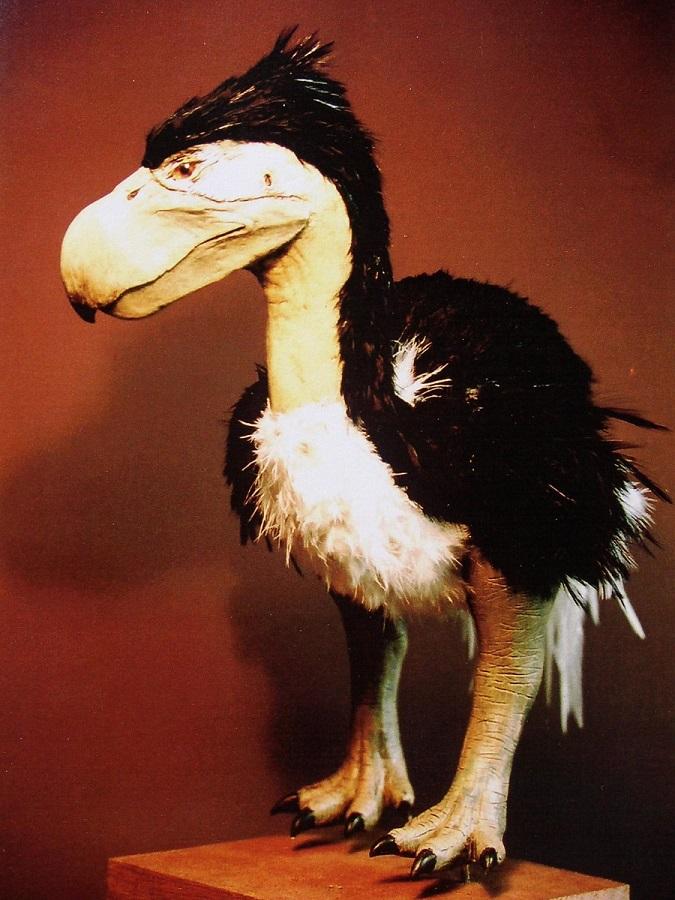 Top kunstwerk van de oervogel uit de prehistorie. Dit levensechte dier figuur is gemaakt door paleo kunstenaar Jaap Roos.
