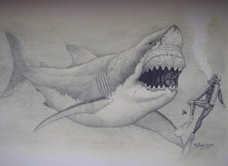 Schilderij zwemmen met een megalodon..