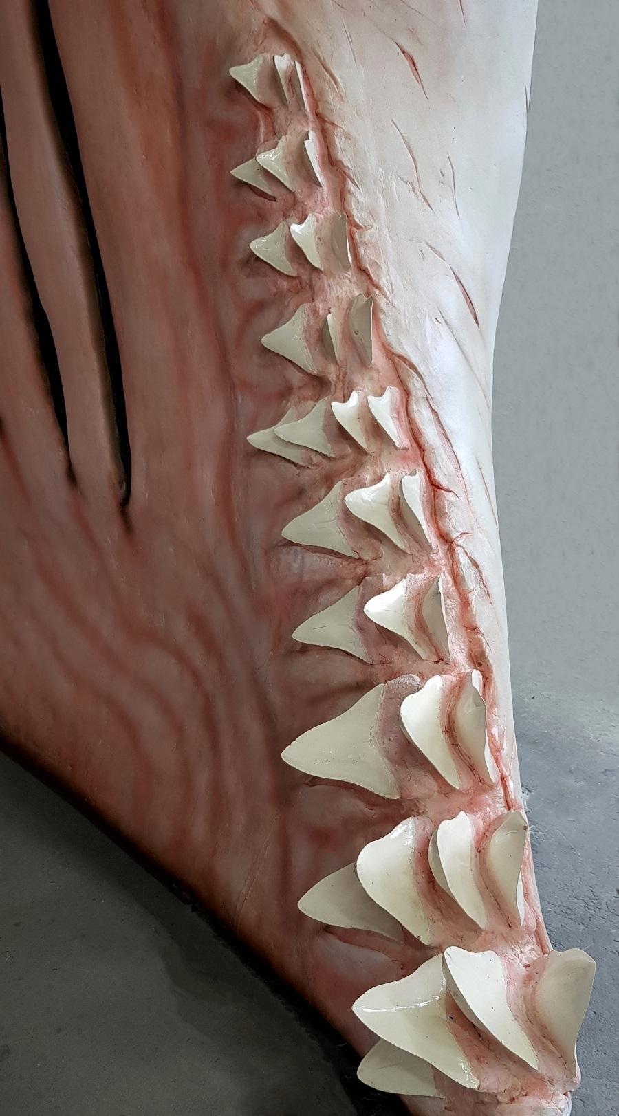 Siliconen rubber haaientanden. Er zijn verschillende mallen gemaakt van echte haaientanden, deze zijn vervolgens gegoten in siliconen rubber