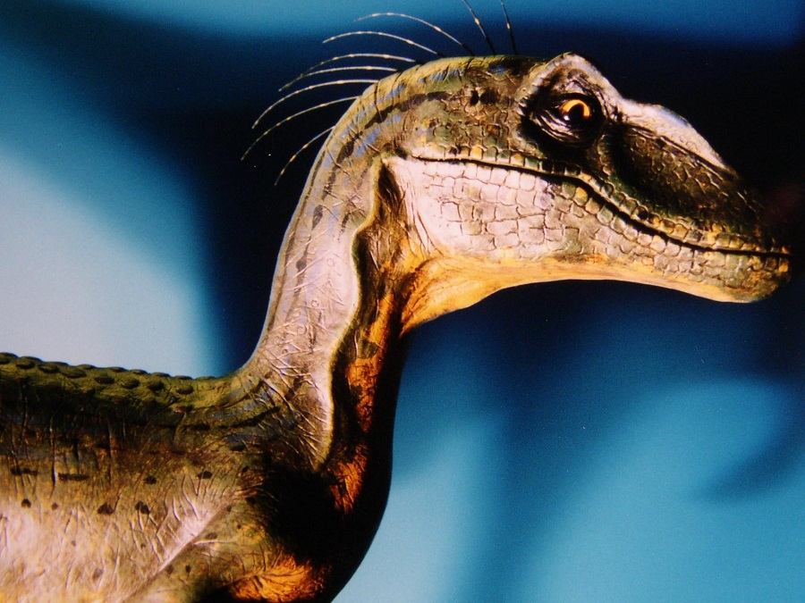 levensecht raptor desktop model. Dit dino model is gemaakt door hedendaags beeldhouwer Jaap Roos