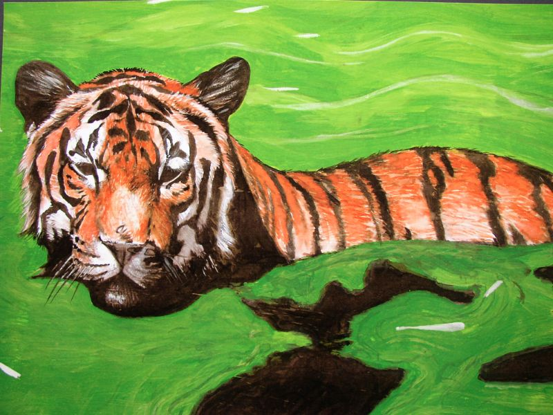 Realistische natuur tekening van een tijger die aan het zwemmen is. Lang geleden getekend door animalier Jaap Roos.