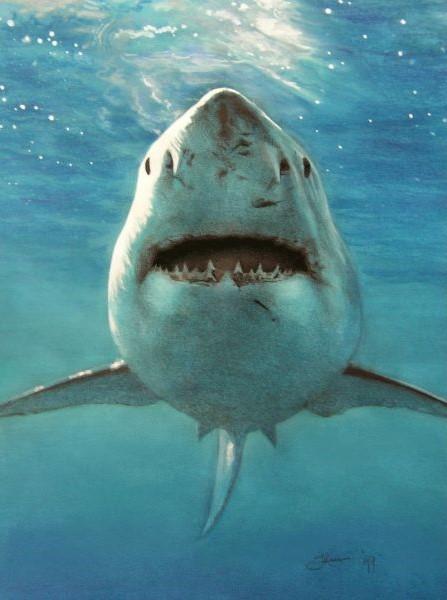 Dieren schilderij van de witte haai vooraanzicht, door illustrator Jaap Roos