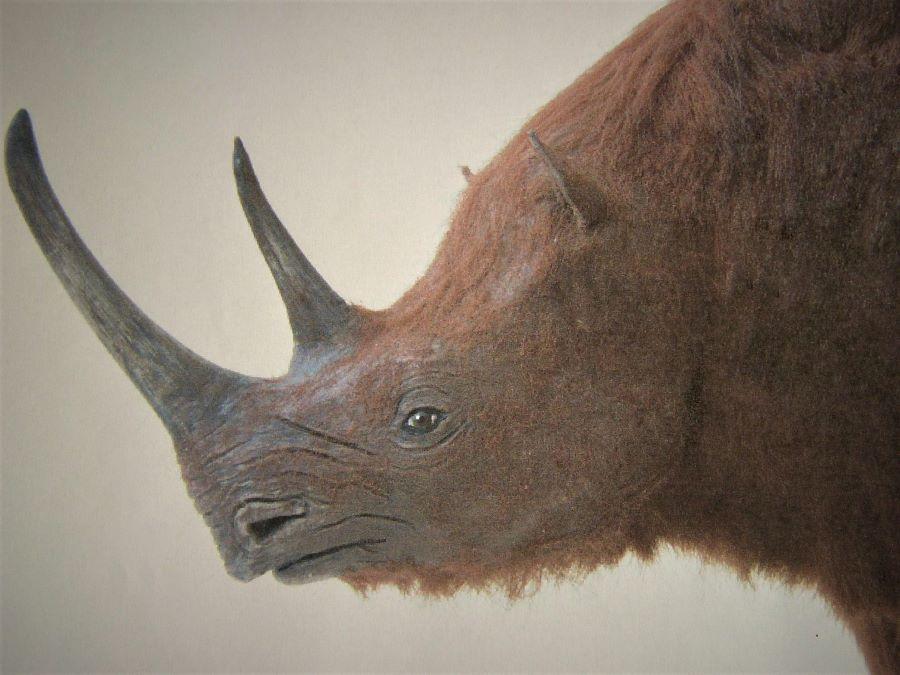 prehistorische wolharige neushoorn realistisch decoratie object voor winkelinrichting