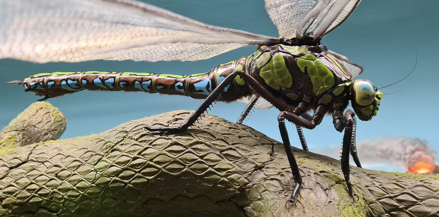 Beeldhouwwerk van de uitgestorven libelle, de Meganeura. Dit sculptuur is onderdeel van een prehistorisch diorama te zien bij museum Historyland.