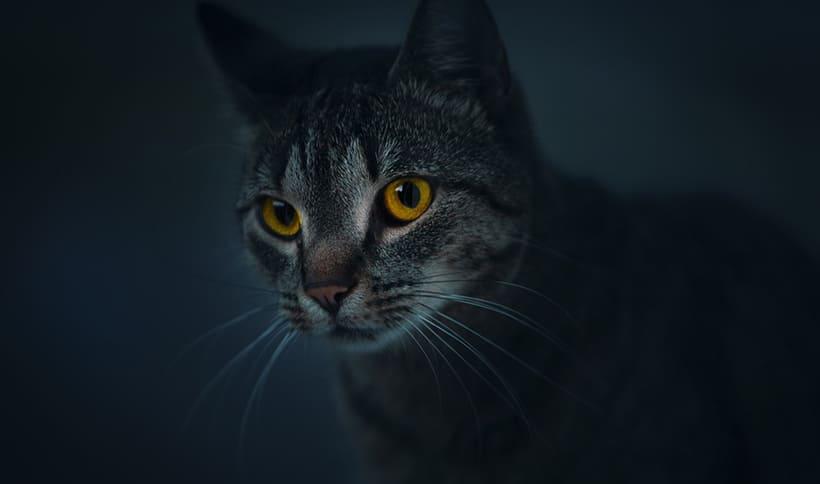 قط chat, cat
