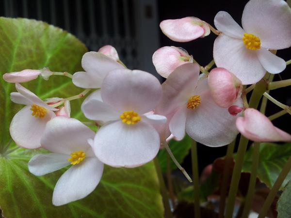 insecticida-natural-plantas