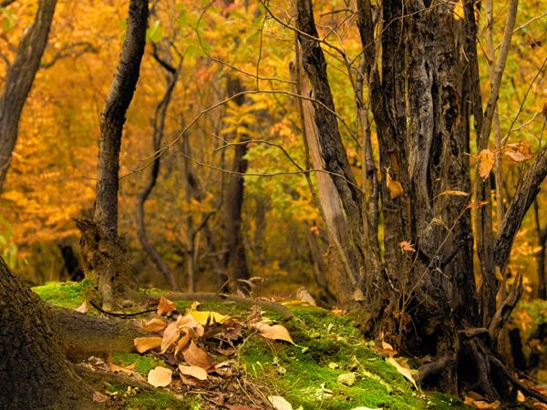 autumn forest - jabonnatural.com