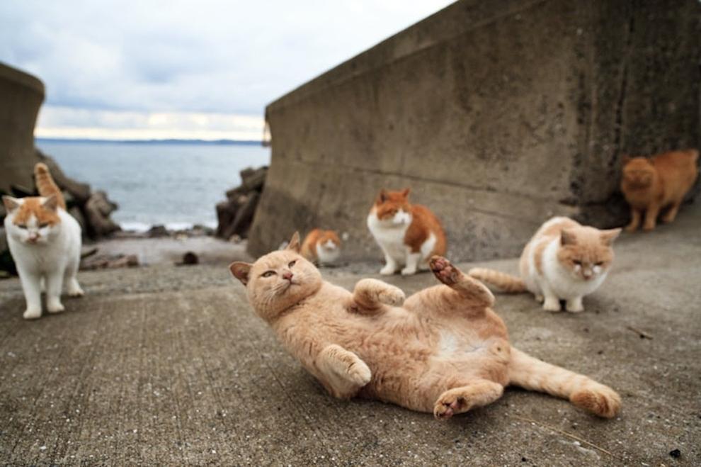 Tashirojima - Gato disfrutando de la vida