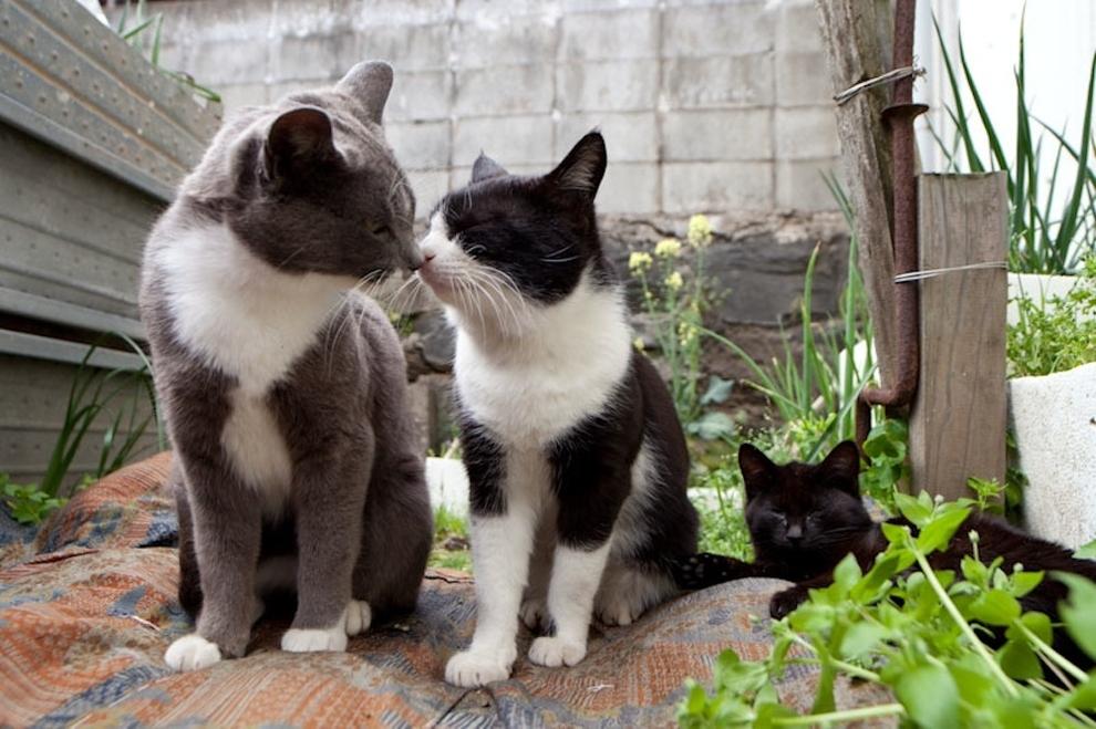 Tashirojima - un paraíso para los gatos