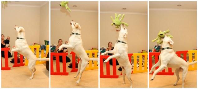 Jumping Benny