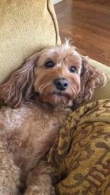 Jackie's dog Rocky