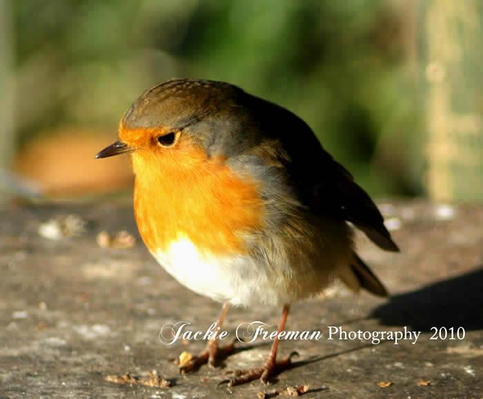 Garden Birds In The Gentle Rain Relaxing Bird And Sounds