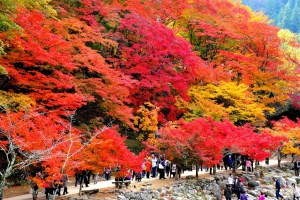 上ノ山公園紅葉