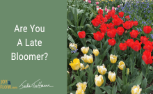Are You a Late Bloomer