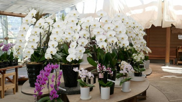 Orchid display at the garden centre on our bus trip