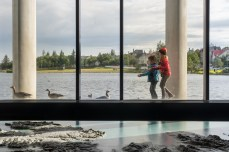 Kids and geese in Reykjavik