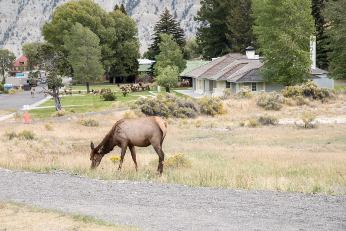 Also spot the other elk in the background