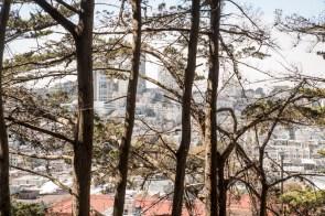 city through the trees
