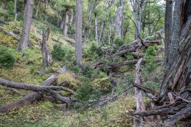 Patagonian nature