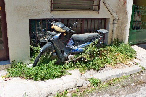 Motorbike aminds Plants