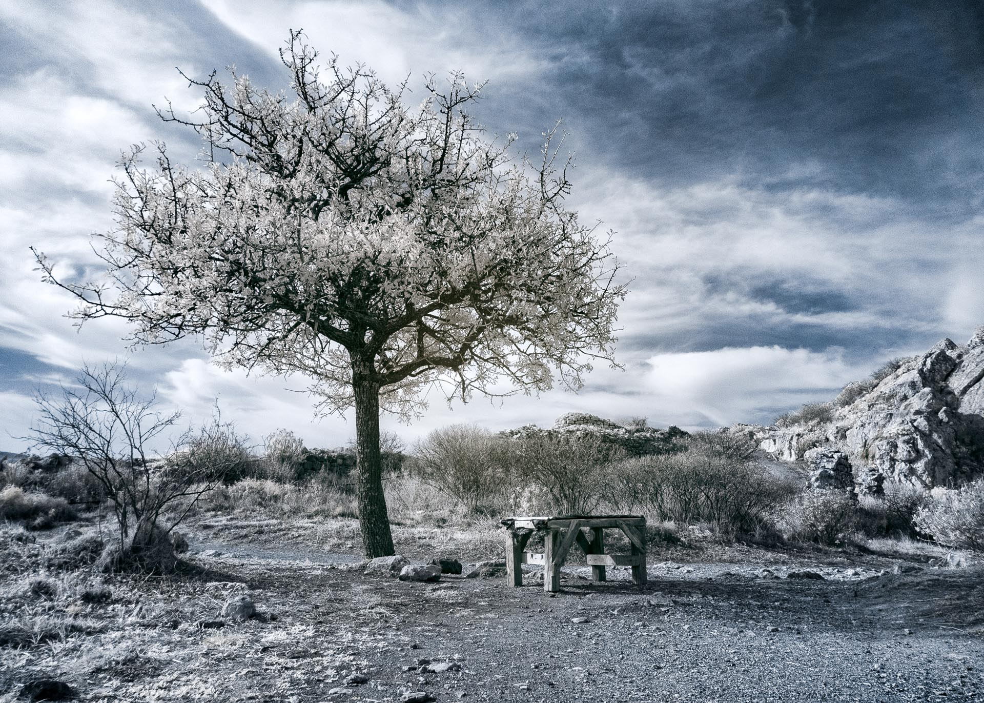 Solitary Tree in Infrared and Bench
