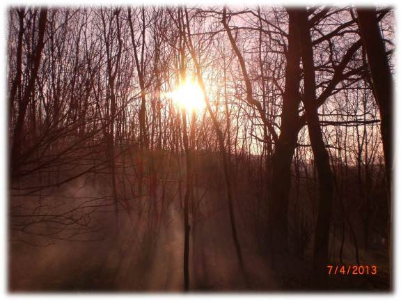 Woodland sunrise