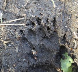 Jack raven Bushcraft in BBC Wildlife Magazine