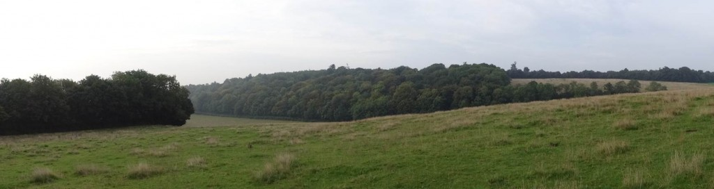 View from the camp | bushcraft| south east | Kent
