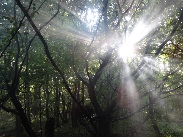 scenic photo | bushcraft | Kent