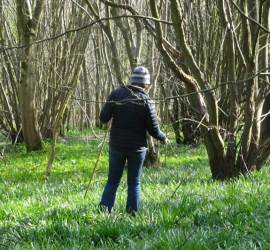 a wander in the woods in April | bushcraft | Kent | south east | foraging
