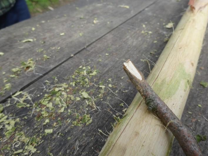 sweet chestnut bark cordage | bushcraft | Kent | London | south east