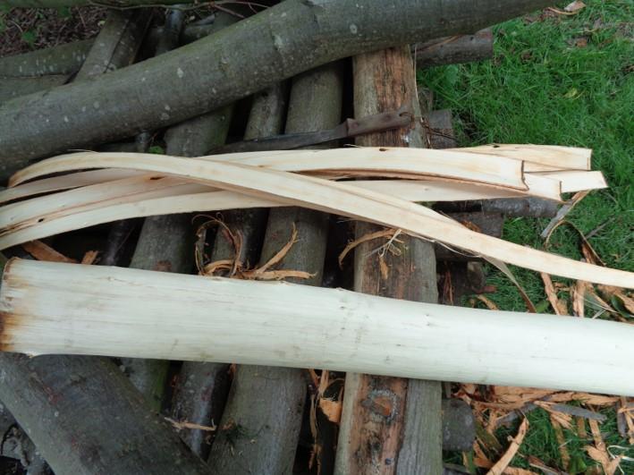 lime bark cordage   bushcraft   Kent   south east   London