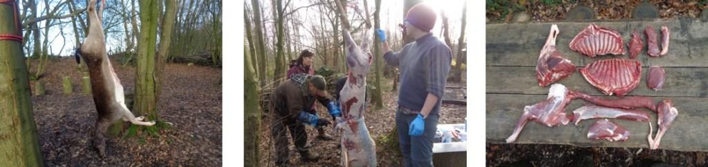 deer preparation and butchery   Kent   south east   London   bushcraft