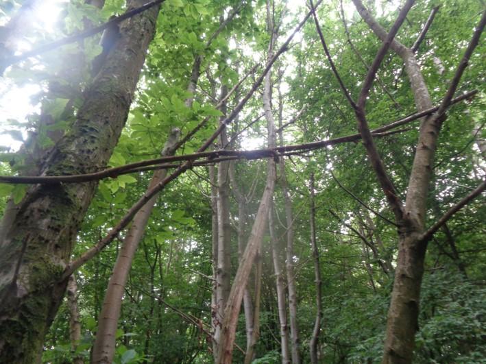 what makes good firewood   bushcraft   fire lighting   Kent   south east   London